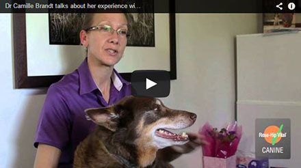Dr Camille Brandt talks about her experience with Rose-Hip Vital® Canine