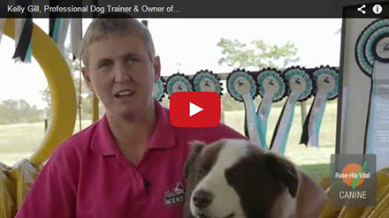 """Kelly Gill, Professional Dog Trainer & Owner of """"The Wonderdogs"""""""